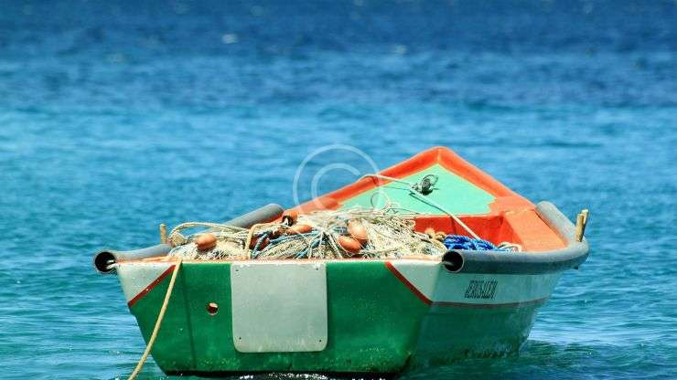 Avoiding Overfishing: Biologists Warn Fishermen